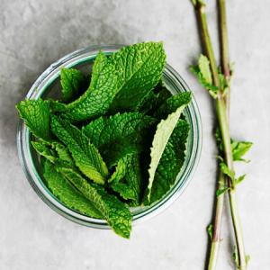 Лечебните свойства на ментовия чай